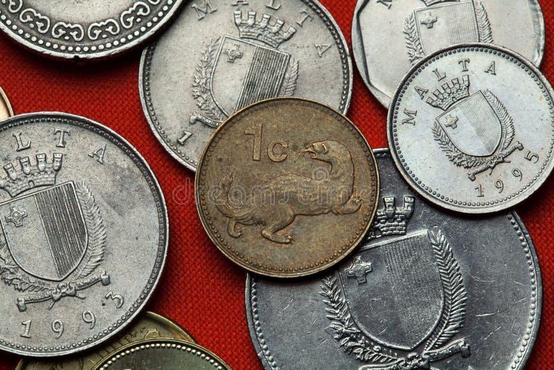 Münzen von Malta Wiesel (Mustela nivalis) lizenzfreie stockfotos