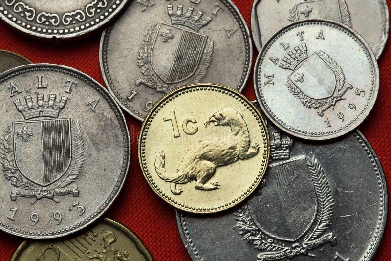 Münzen von Malta Wiesel Mustela nivalis lizenzfreie stockbilder