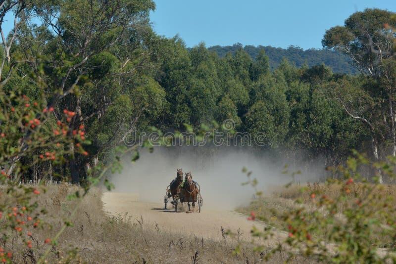 Mürrische Fahrer, die im Gewann in Tasmanien trainieren lizenzfreie stockfotos