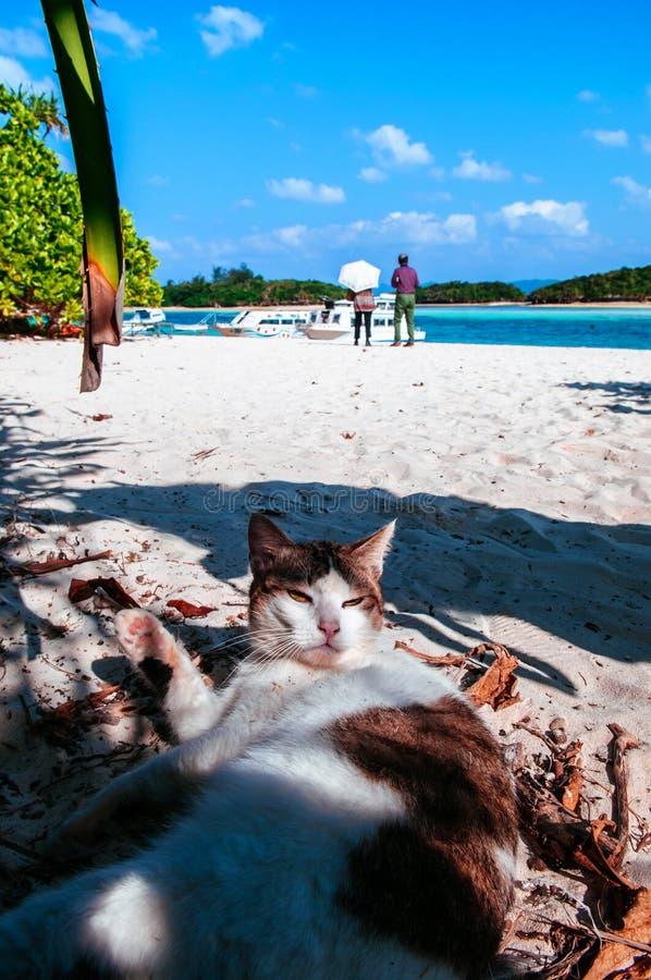 Mürrische Katze auf weißem Sandstrand von Kabira-Bucht, Ishigaki, Okinawa stockbild