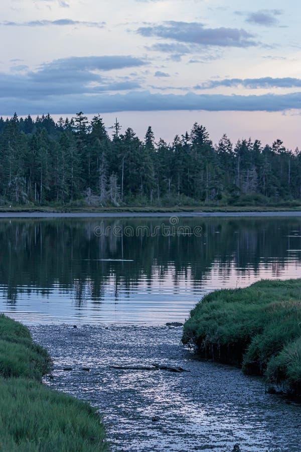 Mąci niskiego przypływu bagna strumienia otaczającego wysoką zieloną trawą przy zmierzchem fotografia royalty free