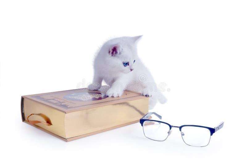 Mądrej białej figlarki Brytyjski shorthair wspinał się na książce isolate zdjęcia stock
