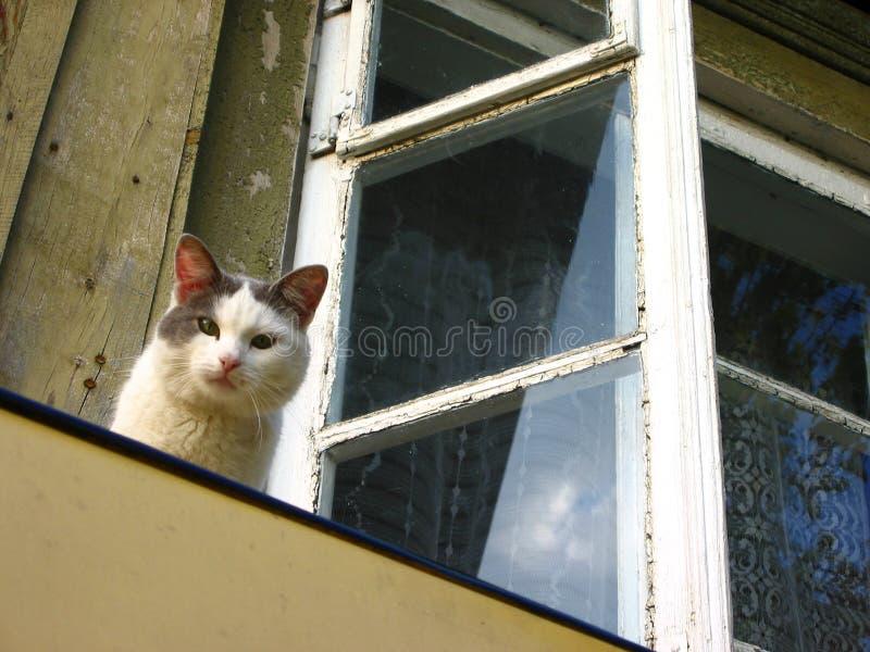 mądry kot obrazy royalty free