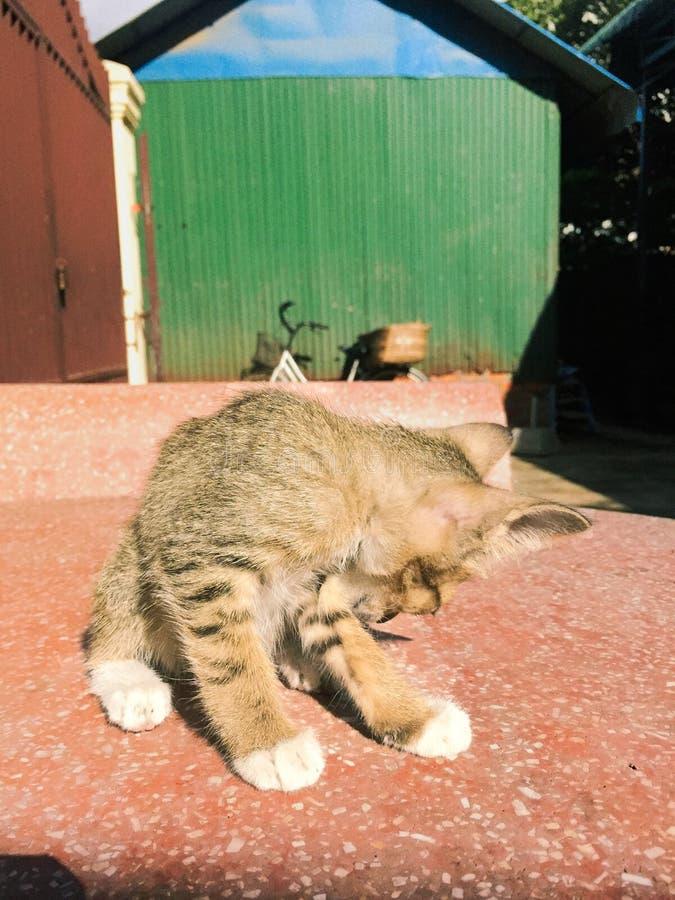 mądry kot zdjęcie royalty free