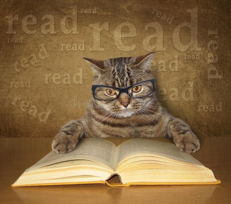 Mądry kot z szkłami czyta książkę obraz royalty free