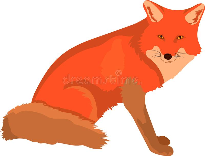 Mądrze śliczny czerwonego lisa kroczenia dopatrywanie i odprowadzenie royalty ilustracja