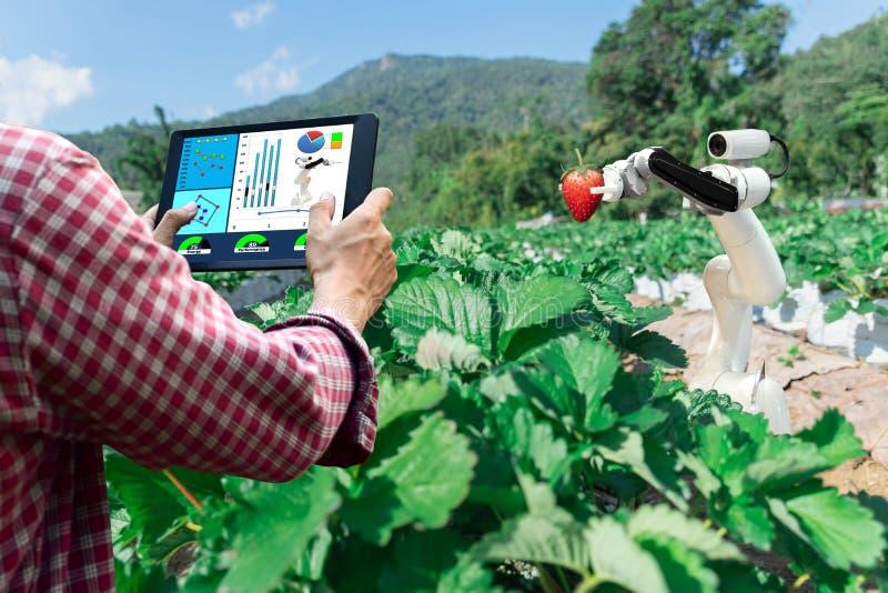 Mądrze mechaniczni rolnicy truskawkowi w rolnictwo robota futurystycznej automatyzacji pracować zdjęcie royalty free
