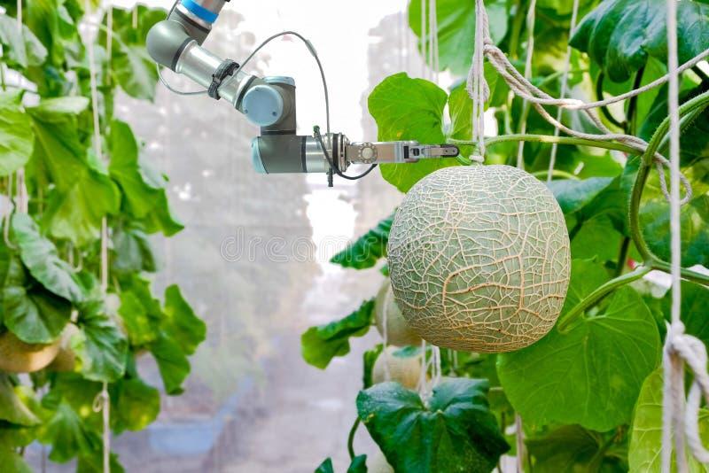 Mądrze mechaniczny na mądrze gospodarstwa rolnego i uprawiać ziemię pojęciu fotografia royalty free