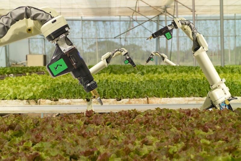 Mądrze mechaniczny w rolnictwa futurystycznym pojęciu, robotów rolników automatyzacja musi programujący pracować rozpylać substan zdjęcia stock