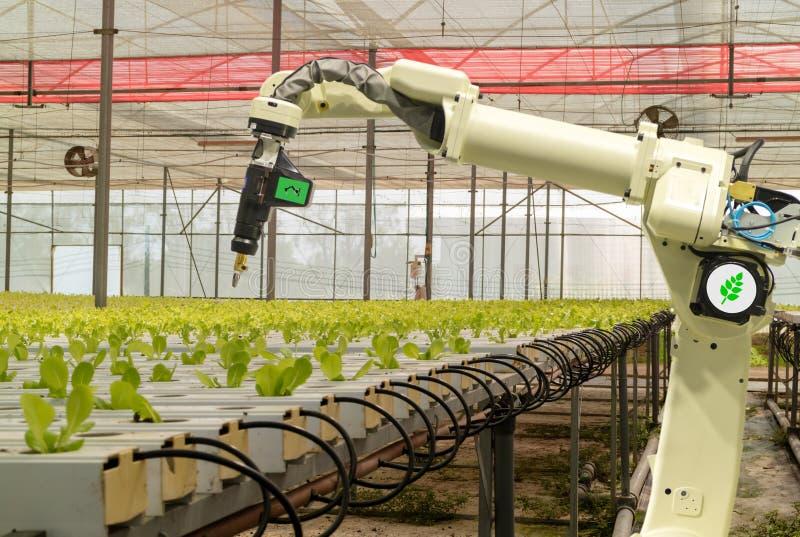 Mądrze mechaniczny w rolnictwa futurystycznym pojęciu, robotów rolników automatyzacja musi programujący pracować rozpylać substan obrazy stock