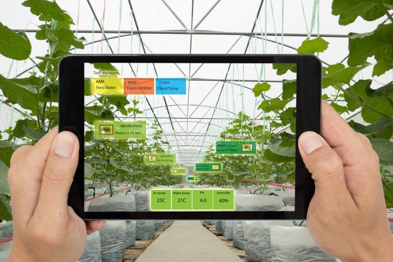 Mądrze rolnictwa pojęcie, agronom lub średniorolny use Sztuczny i, zdjęcie stock