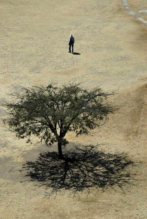 mężczyzna śródpolny drzewo zdjęcie stock