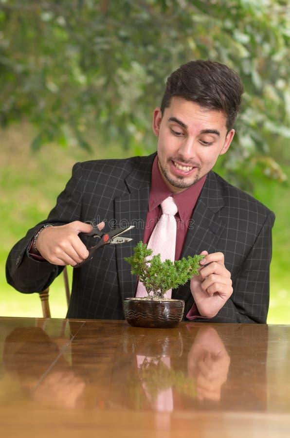 Mężczyzna żyłuje bonsai drzewa obrazy royalty free
