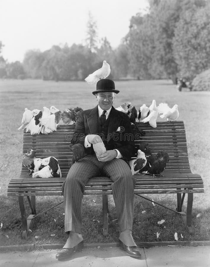 Mężczyzna żywieniowi gołębie na parkowej ławce (Wszystkie persons przedstawiający no są długiego utrzymania i żadny nieruchomość  zdjęcie royalty free