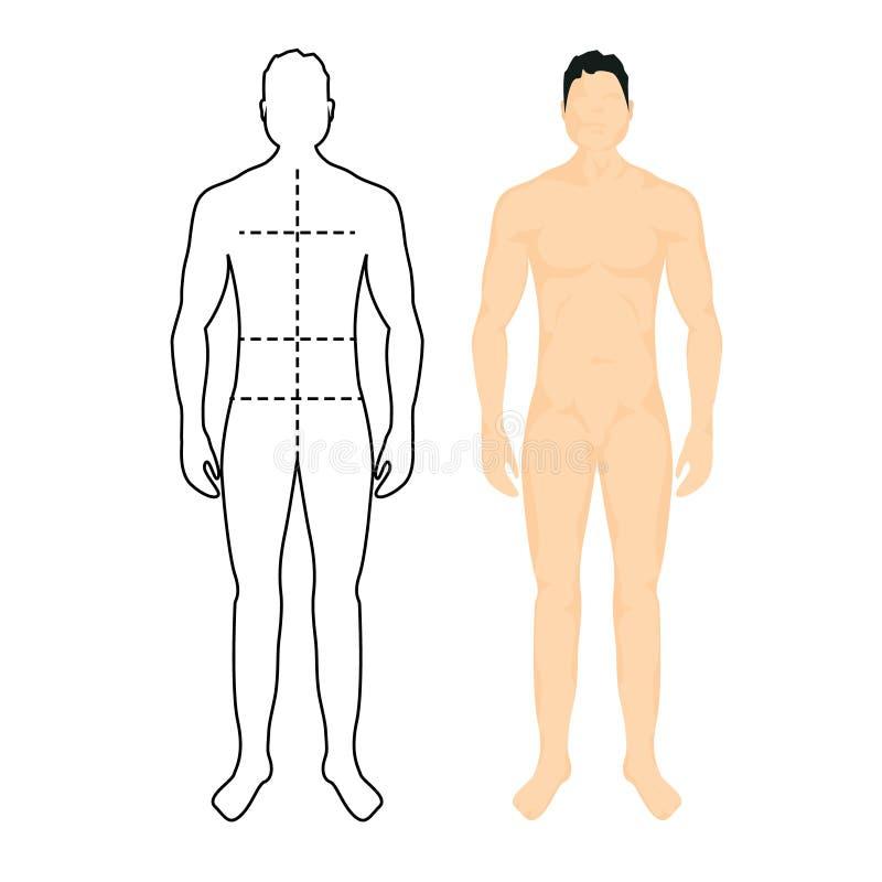 Mężczyzna anatomii sylwetki rozmiar Ciało ludzkie postaci męskiej talii pełna miara, klatki piersiowej mapy szablon royalty ilustracja