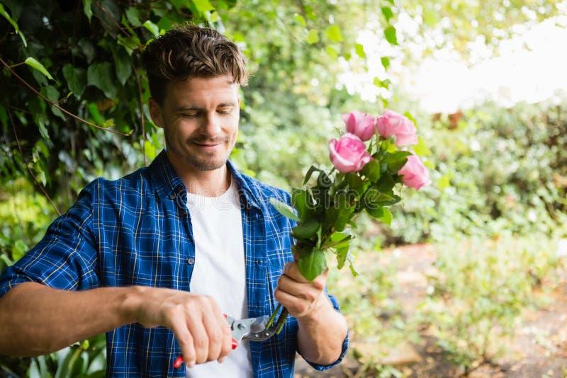Mężczyzna arymaż kwitnie z przycinać strzyżenia w ogródzie obrazy stock