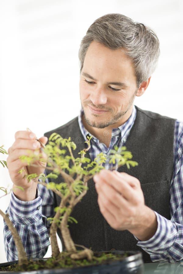 Mężczyzna bierze opiekę bonsai obraz stock