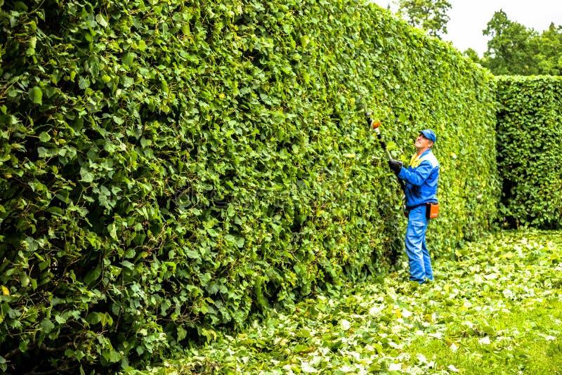 Mężczyzna ciie drzewa w parku Fachowa ogrodniczka w mundurze ciie krzaki z cążkami Przycinać ogród, żywopłot pracownik zdjęcia stock