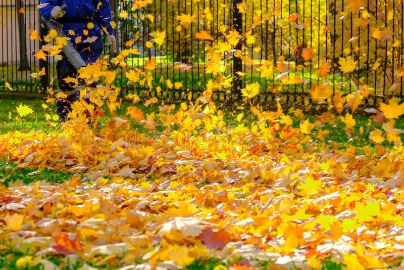 Mężczyzna czyści jesień parka od spadać liści obrazy royalty free