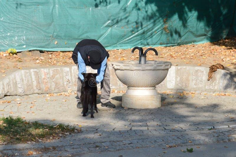 mężczyzna daje wodzie pies obraz stock