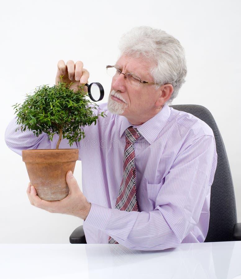 mężczyzna drzewo starszy mały fotografia royalty free