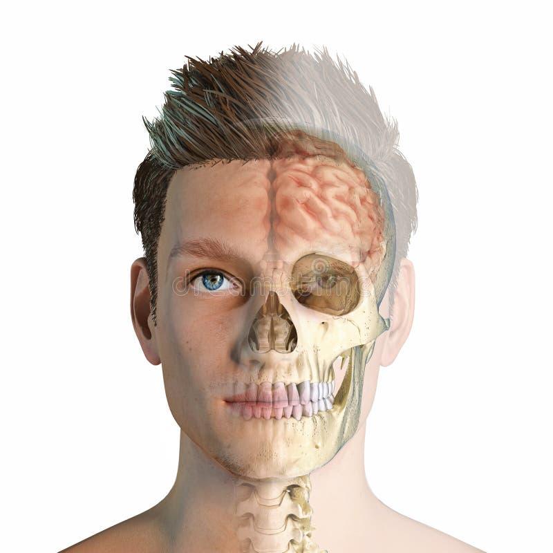 Mężczyzna głowa z czaszką i mózg ghosted ilustracja wektor