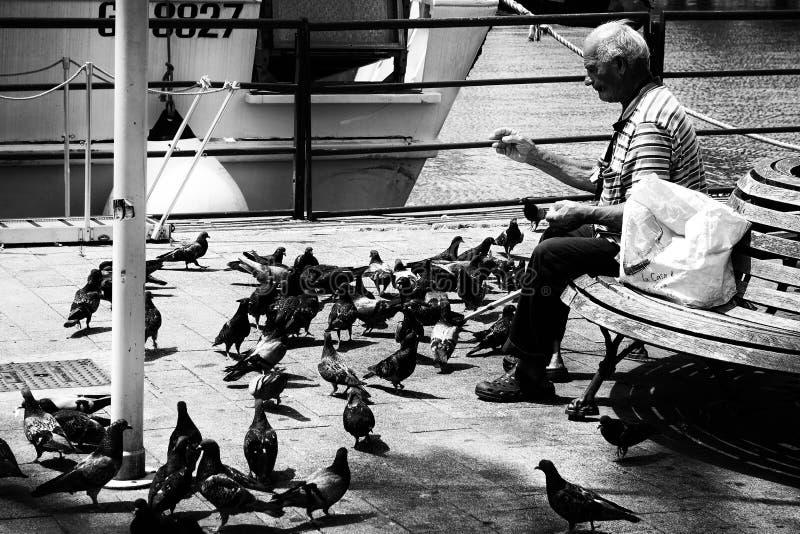 Mężczyzna gołębi karmienia Osamotniona ławka zdjęcia royalty free