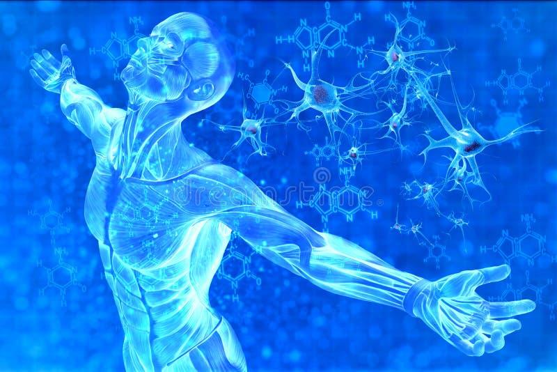 Mężczyzna i chemicznej formuły DNA royalty ilustracja