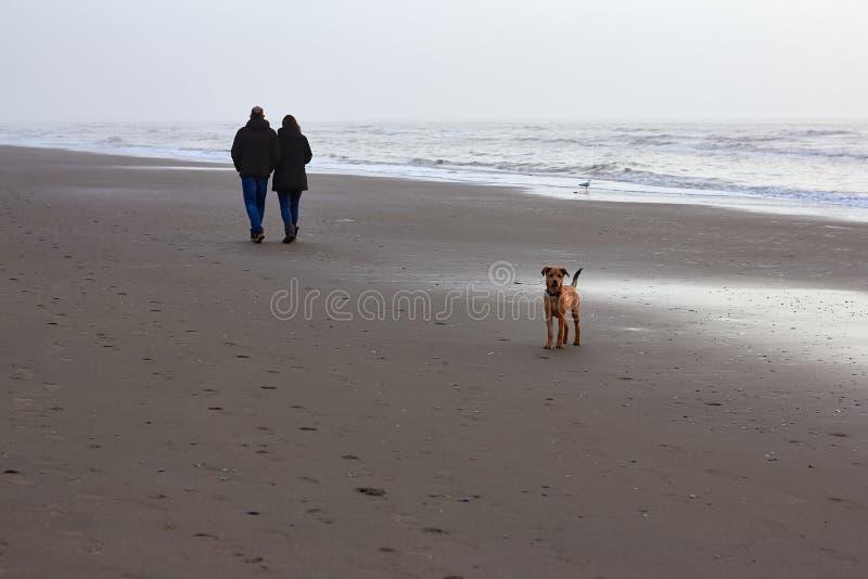 Mężczyzna i kobiety odprowadzenie z psem wzdłuż wybrzeża Północny morze obraz royalty free