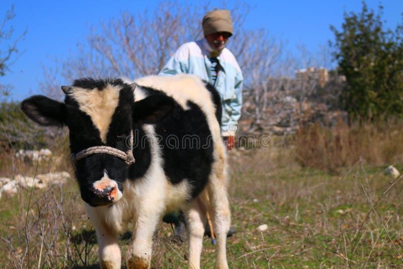 Mężczyzna i krowa zdjęcia stock