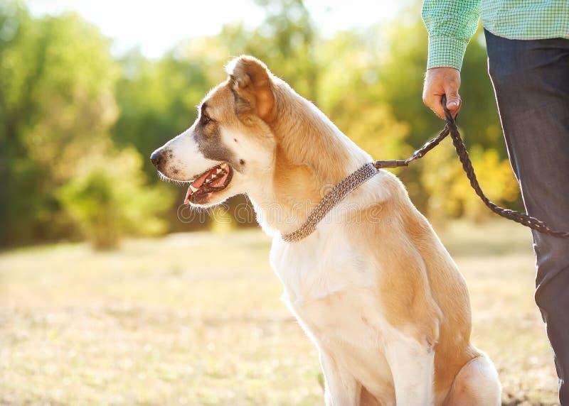 Mężczyzna i pies w parku fotografia royalty free