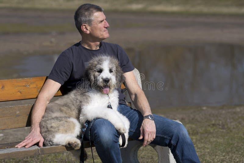 Mężczyzna i szczeniak na parkowej ławce zdjęcia stock