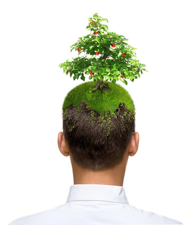 mężczyzna jabłczany drzewo zdjęcie royalty free