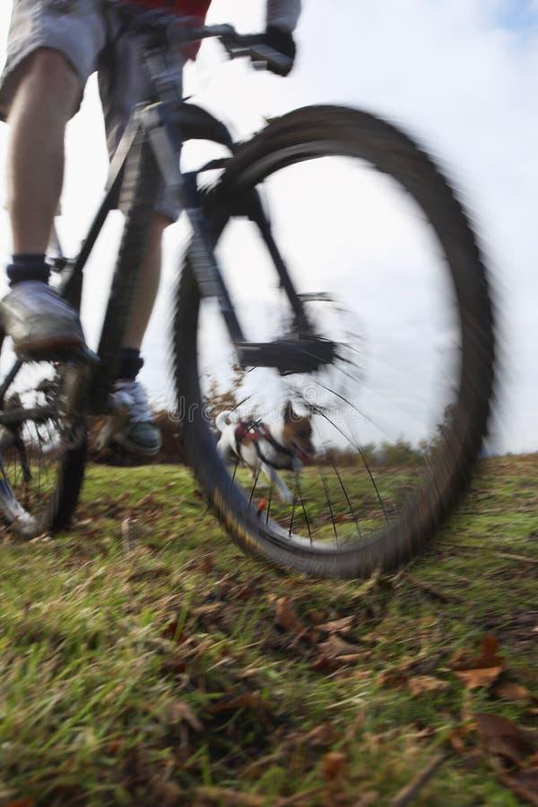 Mężczyzna Jeździecki rower górski Z psem zdjęcia royalty free