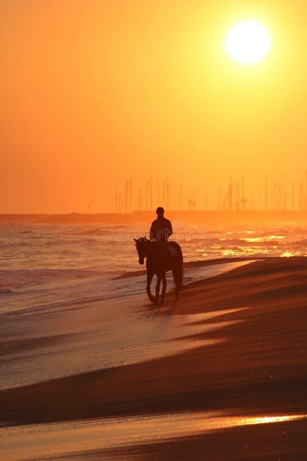 Mężczyzna jedzie konia na plaży zdjęcie stock