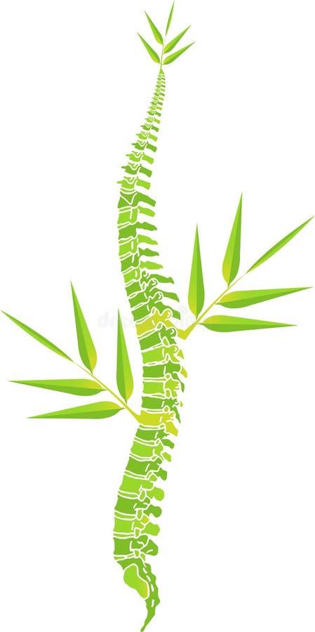 Mężczyzna kręgosłupa bambusa liść royalty ilustracja