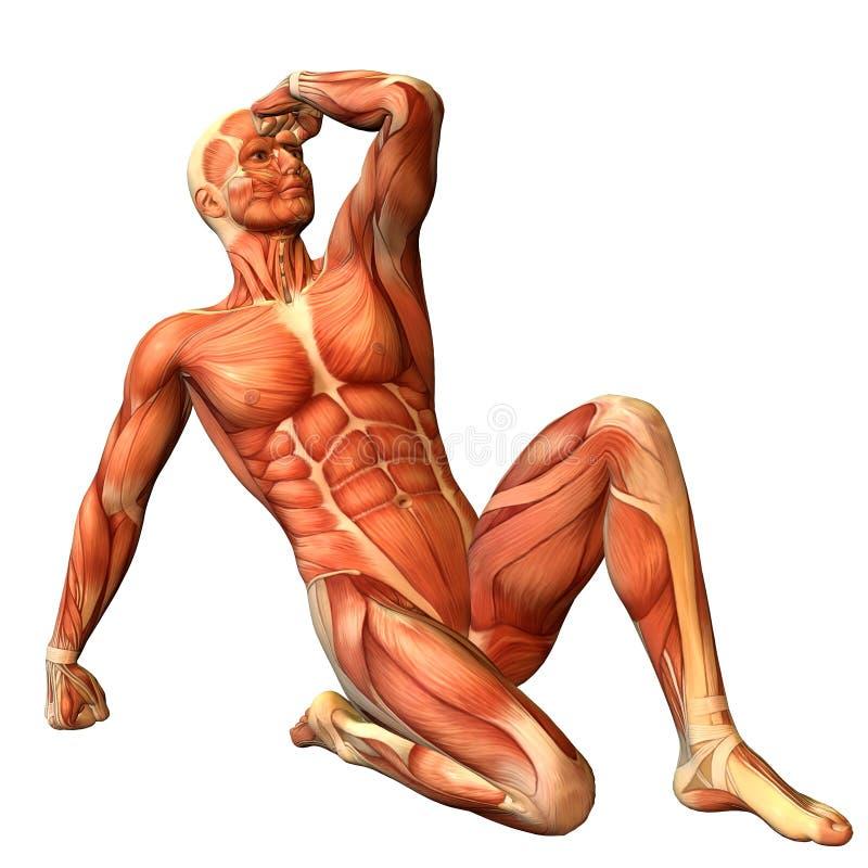 mężczyzna mięśnia postury obsiadanie royalty ilustracja
