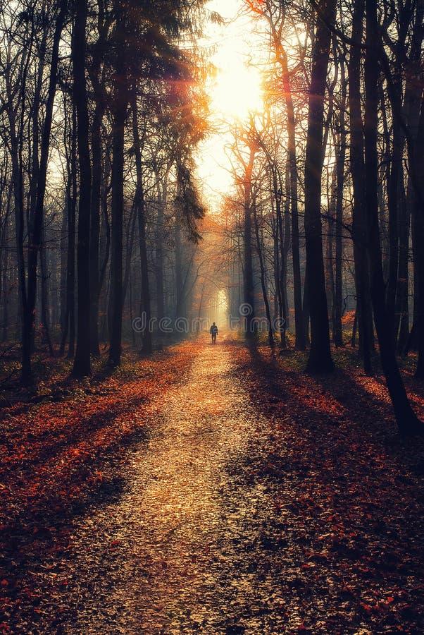 Mężczyzna na ścieżce w markotnym lesie obraz stock