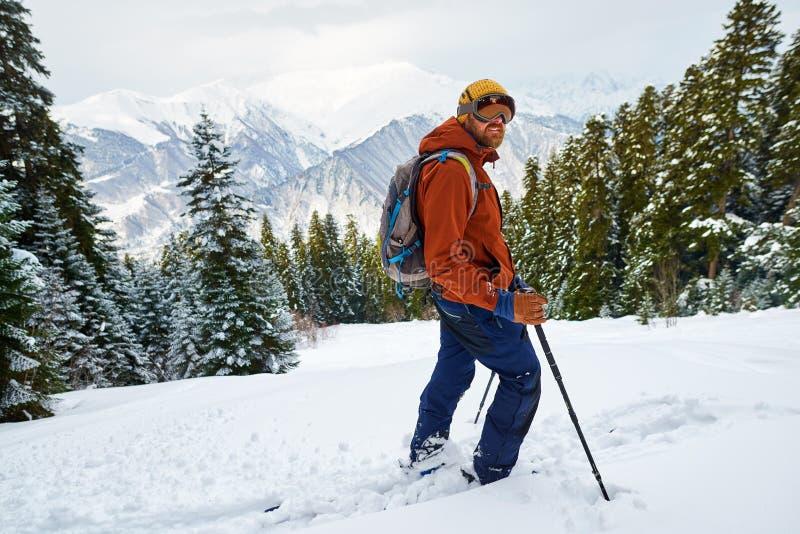 Mężczyzna narciarka w przekładnia stojakach na skłonie w lesie zdjęcia stock