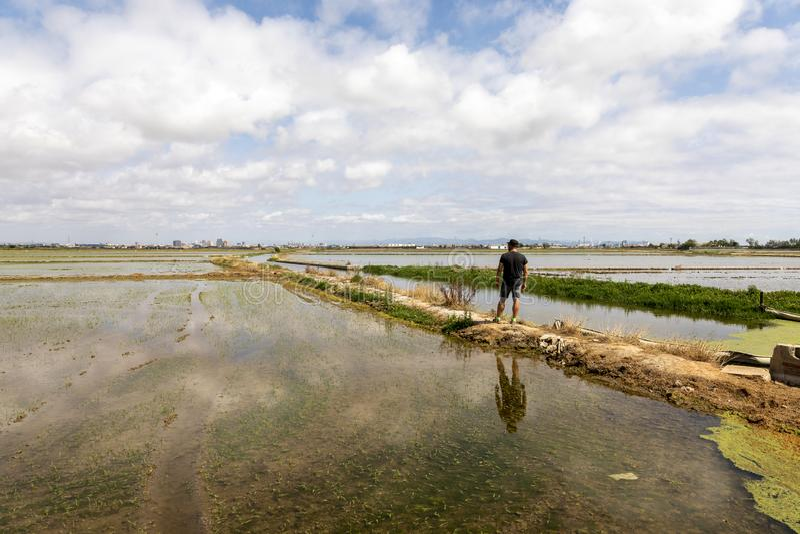 Mężczyzna obserwuje ryż pola blisko Walencja obrazy stock