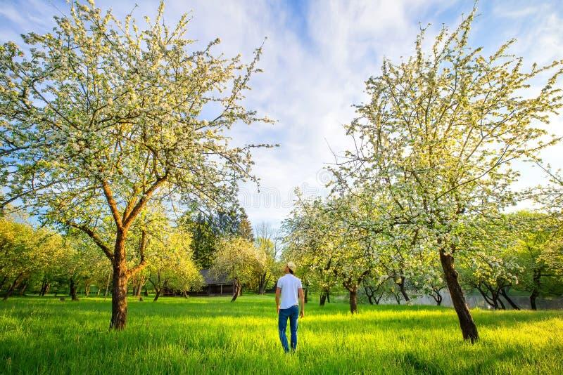 Mężczyzna odprowadzenie w pięknym kwitnienie ogródzie w ranku Lato zdjęcie stock