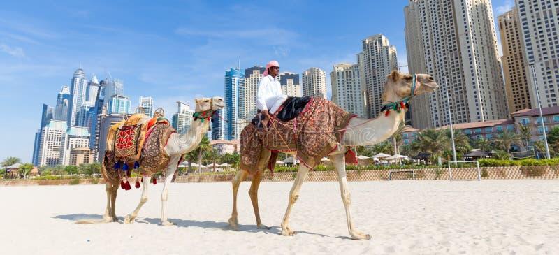 Mężczyzna ofiary wielbłądzia przejażdżka na Jumeirah plaży, Dubaj, Zjednoczone Emiraty Arabskie zdjęcie royalty free