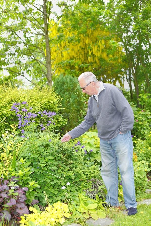 Mężczyzna ogrodnictwo w jego ogródzie fotografia royalty free