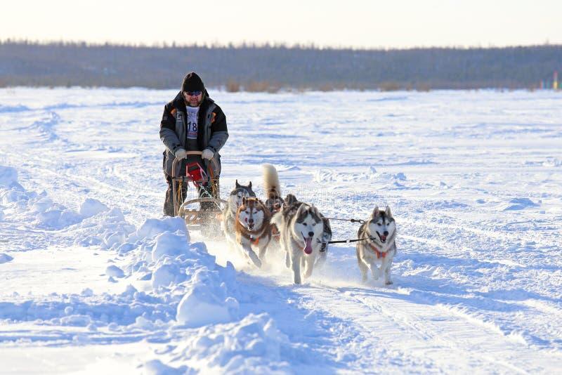 Mężczyzna pośpiechy na dogsled zdjęcia royalty free