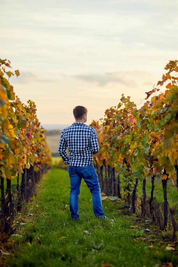 Mężczyzna pozycja w jesień winnicy przy zmierzchem fotografia stock
