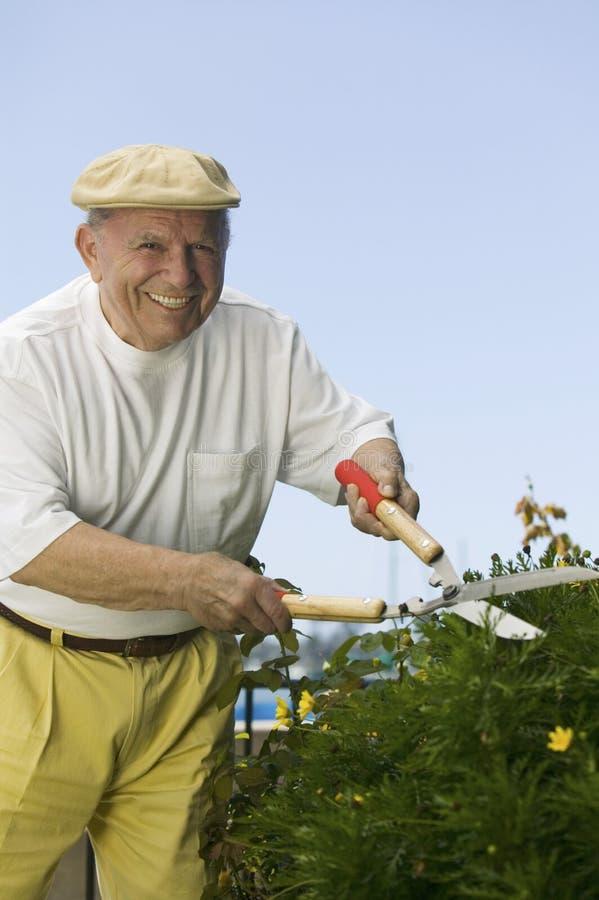 Mężczyzna Przycina rośliny obrazy royalty free