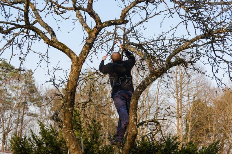 Mężczyzna przycinający rozgałęzia się z rękojeść cążków nożycami obraz royalty free