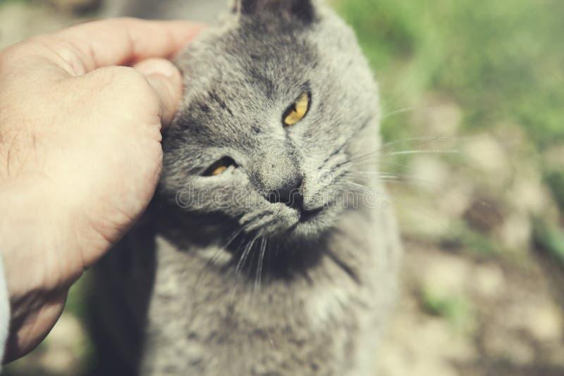 Mężczyzna ręka z kotem obrazy royalty free