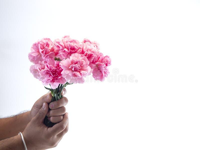 Mężczyzna ręki chwyta menchii goździk na białym tle fotografia stock