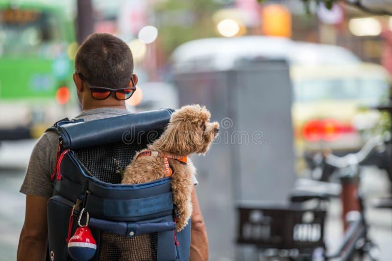 Mężczyzna ` s plecak psa inside plecy obrazy royalty free